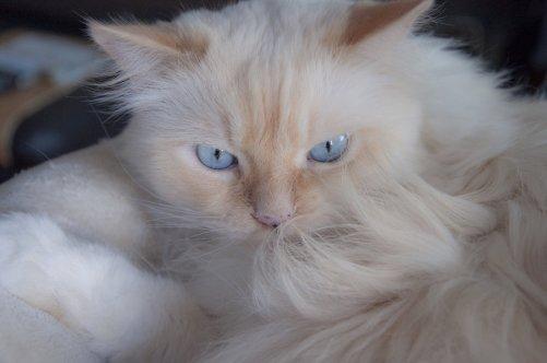 hair cat.jpg
